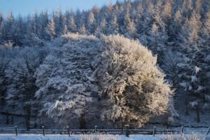January at Green Hope